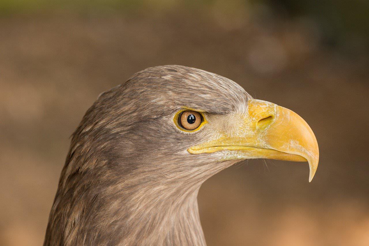 Eagle Eye Website Security